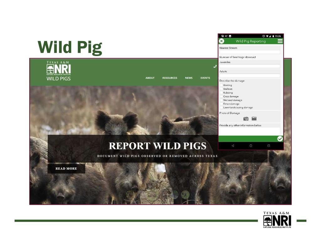 Wild Pig https://wildpigs.nri.tamu.edu TAMU Ext...