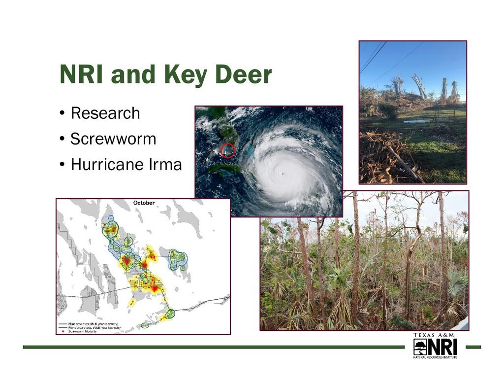 NRI and Key Deer • Research • Screwworm • Hurri...