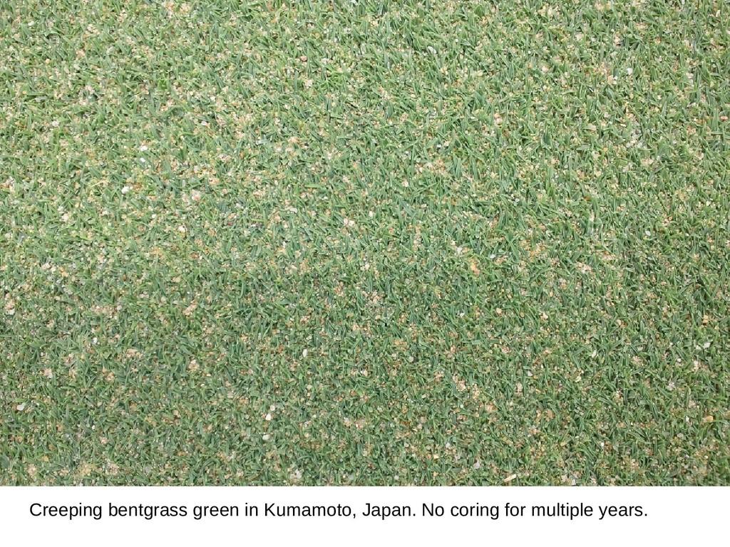 Creeping bentgrass green in Kumamoto, Japan. No...