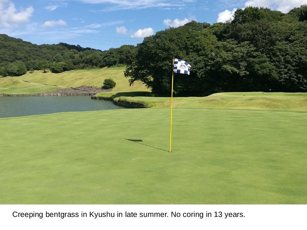 Creeping bentgrass in Kyushu in late summer. No...