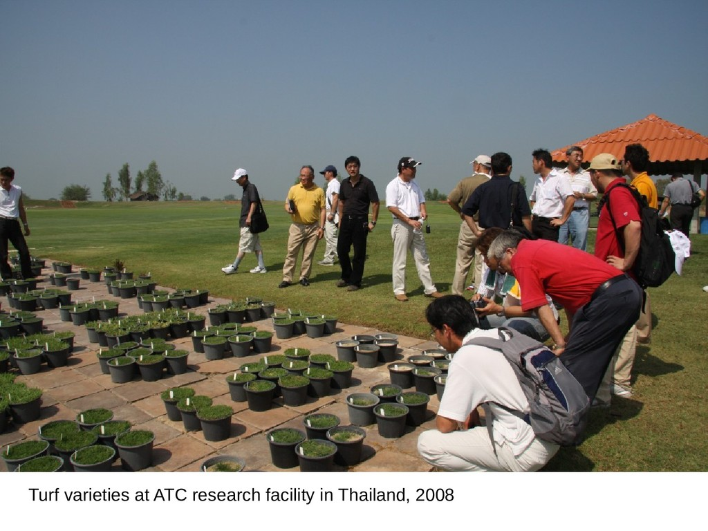 Turf varieties at ATC research facility in Thai...