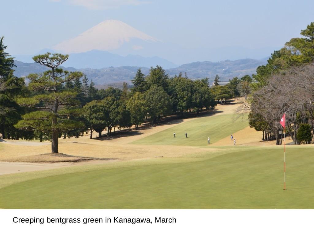 Creeping bentgrass green in Kanagawa, March