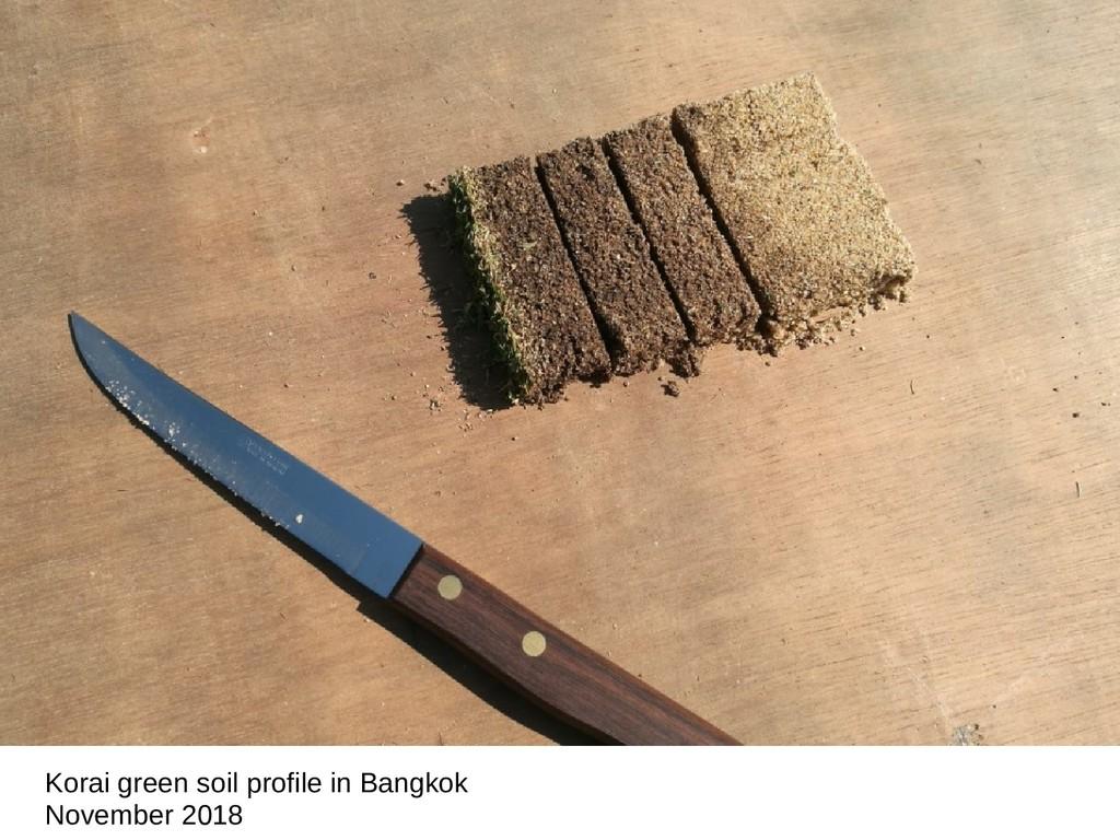 Korai green soil profile in Bangkok November 20...