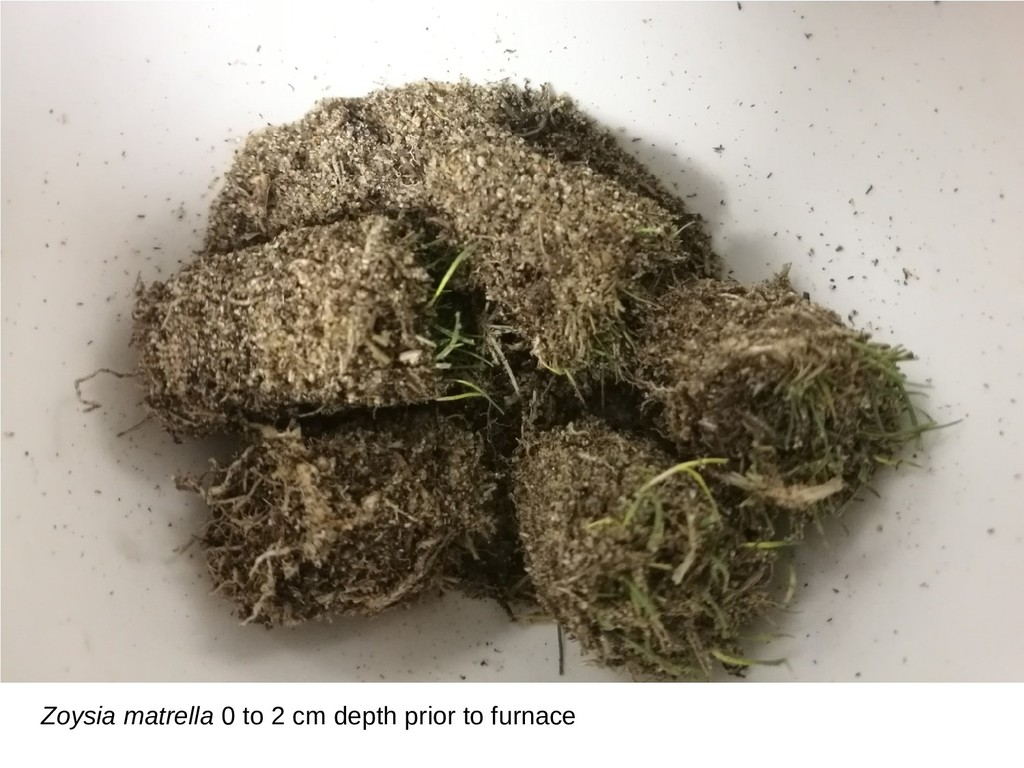 Zoysia matrella 0 to 2 cm depth prior to furnace
