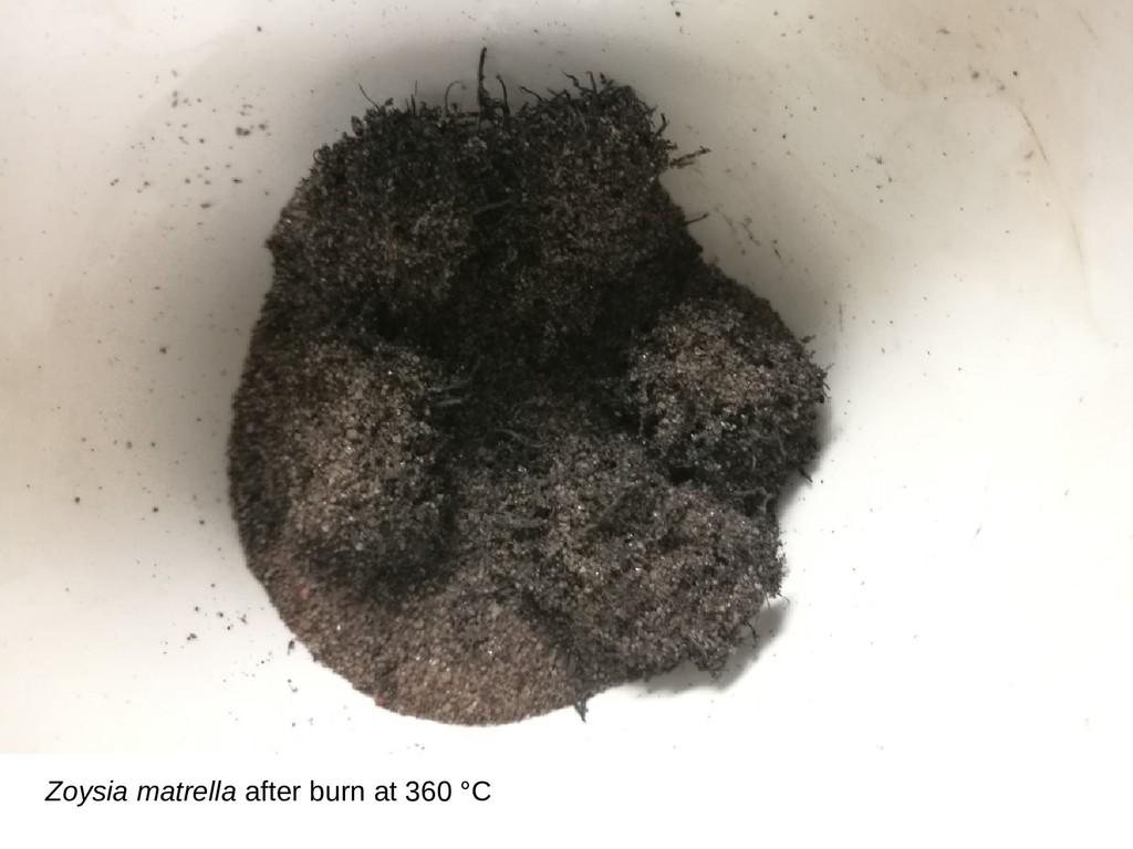 Zoysia matrella after burn at 360 °C