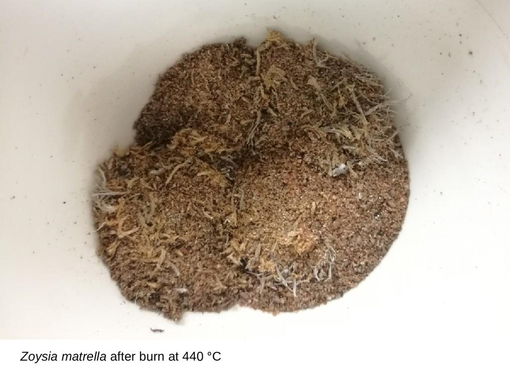 Zoysia matrella after burn at 440 °C