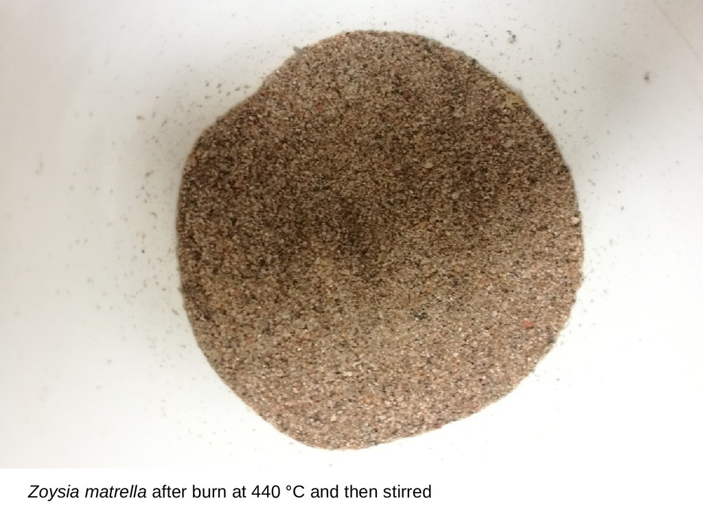 Zoysia matrella after burn at 440 °C and then s...