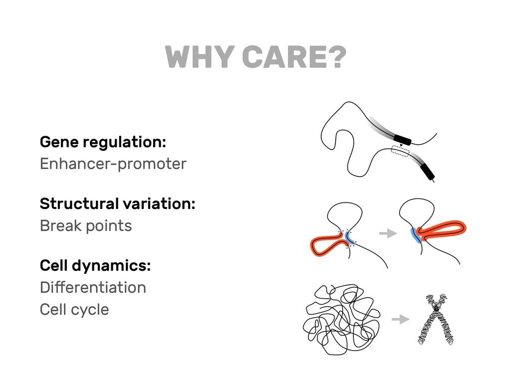 Gene regulation: Enhancer-promoter Structural v...