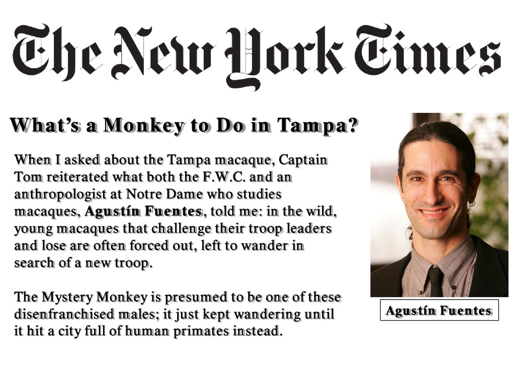 What's a Monkey to Do in Tampa? When I asked ab...
