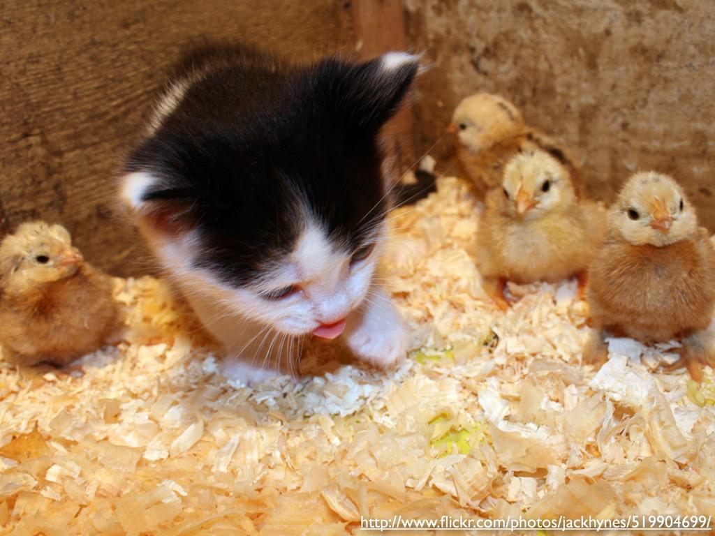 http://www.flickr.com/photos/jackhynes/519904699/