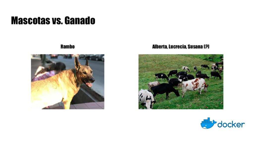 Mascotas vs. Ganado Rambo Alberta, Lucrecia, Su...
