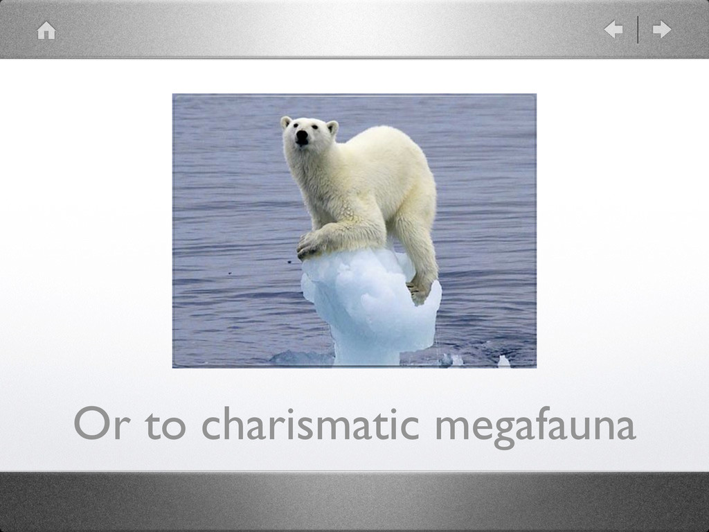 Or to charismatic megafauna