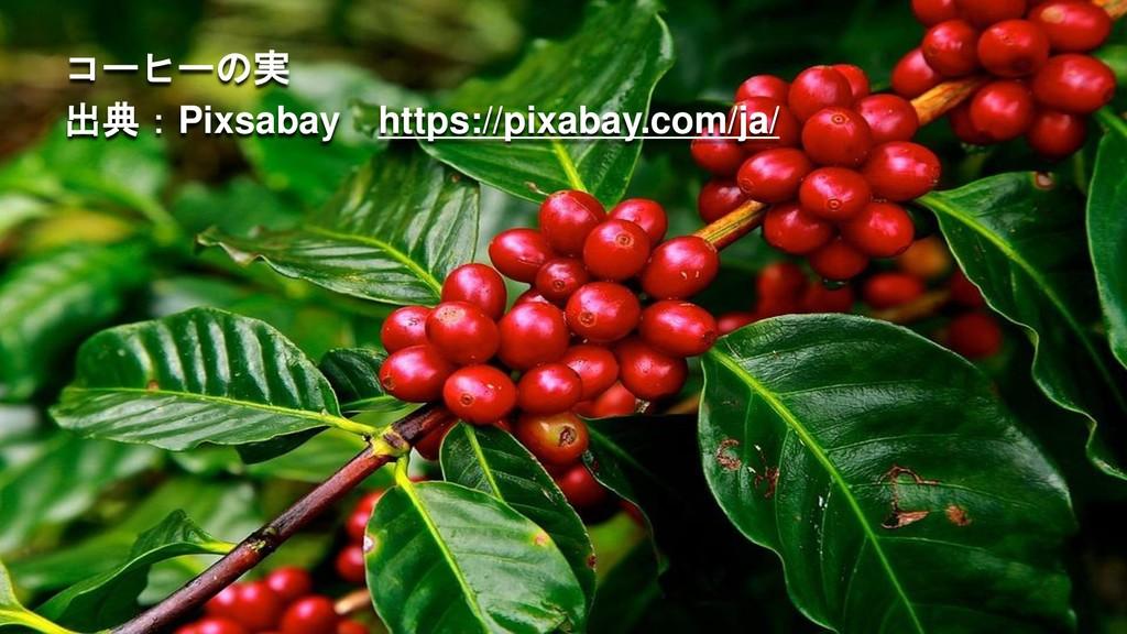 コーヒーの実 出典:Pixsabay https://pixabay.com/ja/