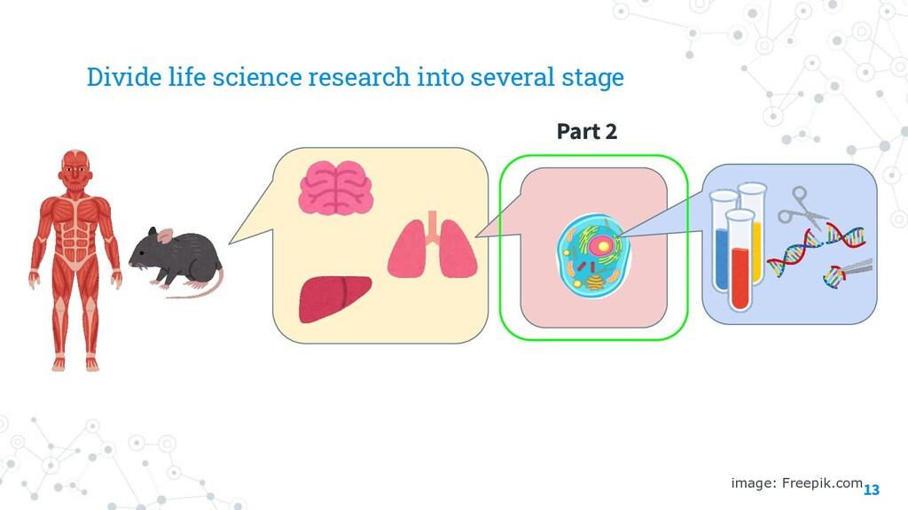 13 image: Freepik.com Part 2 Divide life scienc...
