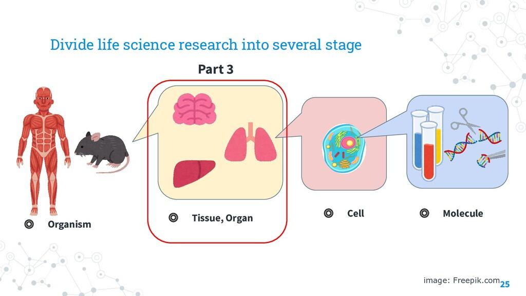 25 image: Freepik.com ◎ Molecule ◎ Cell ◎ Tissu...