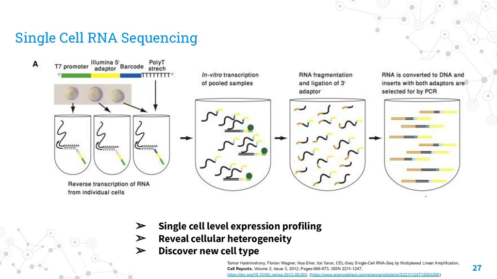 Single Cell RNA Sequencing 27 ➢ Single cell lev...