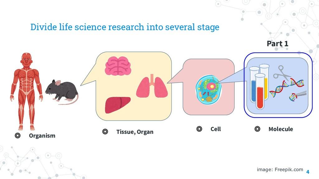 Part 1 4 image: Freepik.com ◎ Molecule ◎ Cell ◎...
