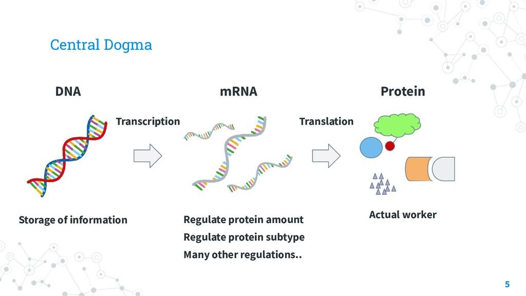 Central Dogma 5 Storage of information DNA mRNA...