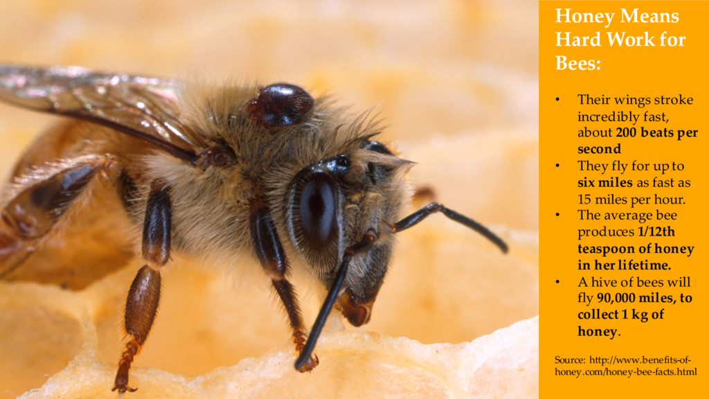 Honey Means Hard Work for Bees: • Their wings s...