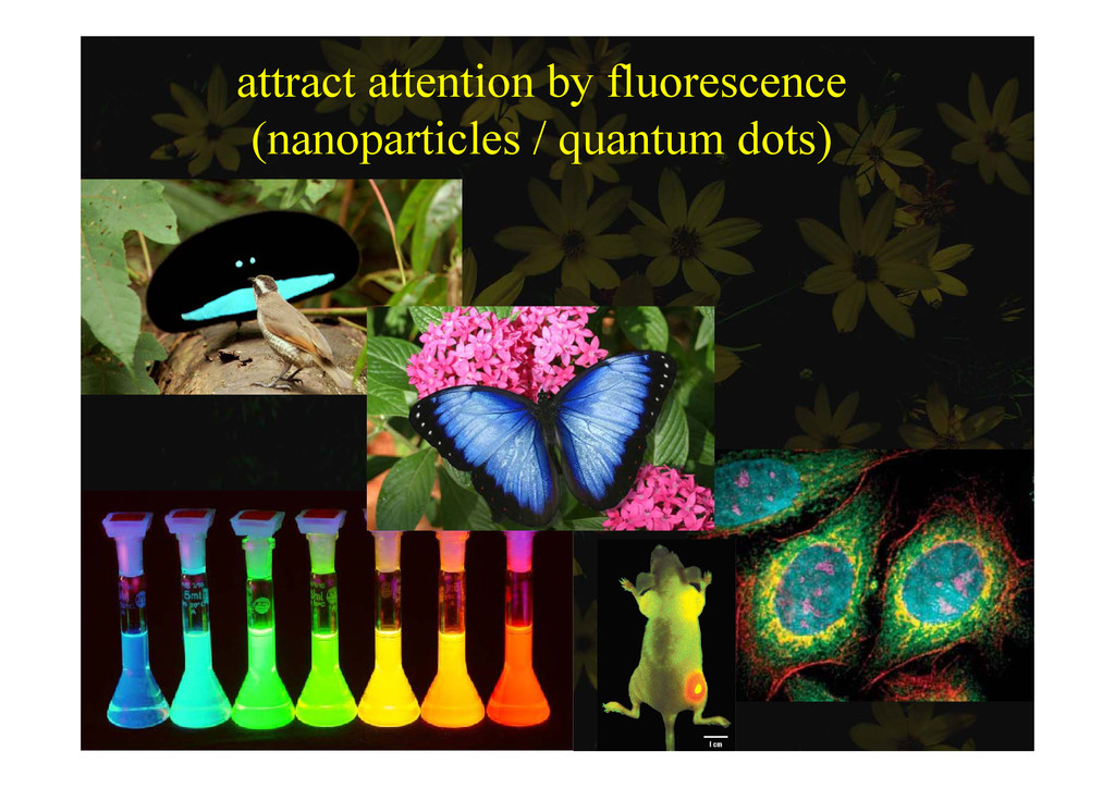 attract attention by fluorescence ( ti l / t d ...