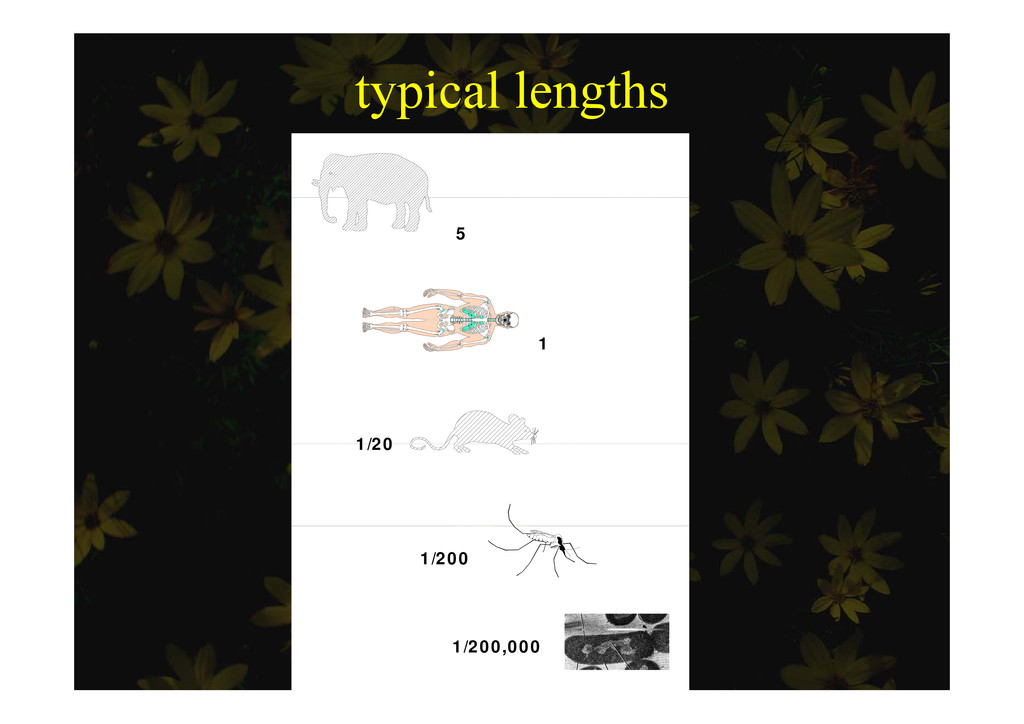 typical lengths yp g 5 1 1/20 1/20 1/200 1/200,...