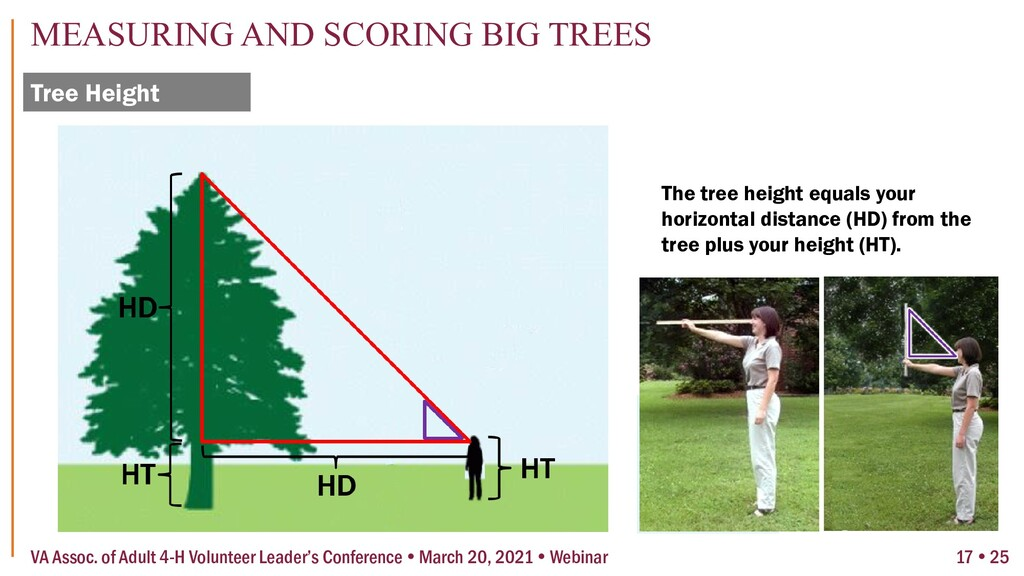 Tree Height MEASURING AND SCORING BIG TREES 17 ...