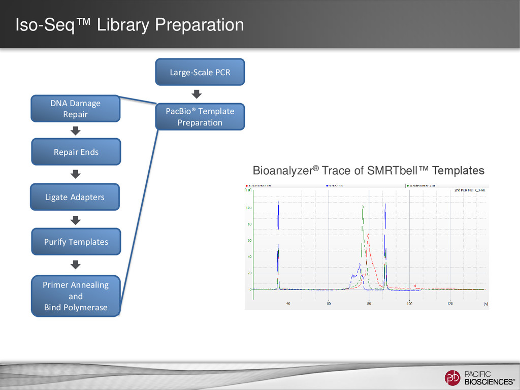 Iso-Seq™ Library Preparation Bioanalyzer® Trace...