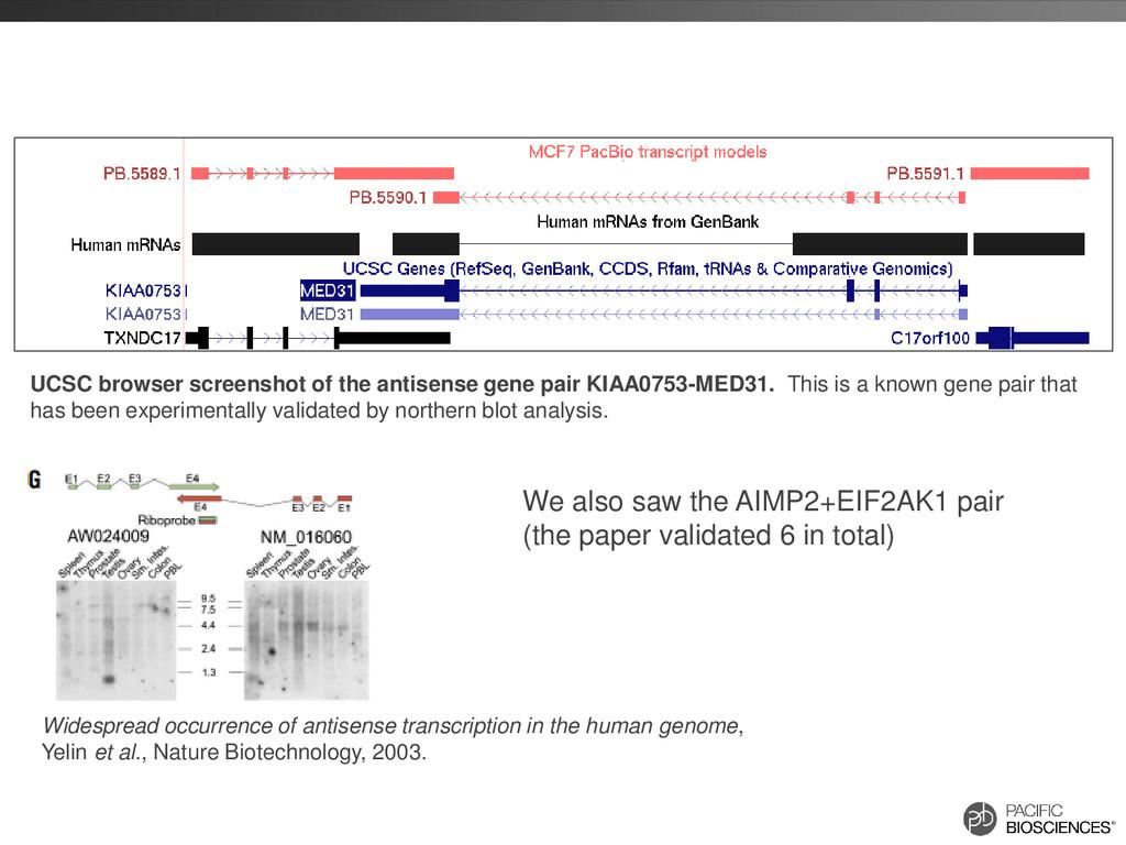 UCSC browser screenshot of the antisense gene p...