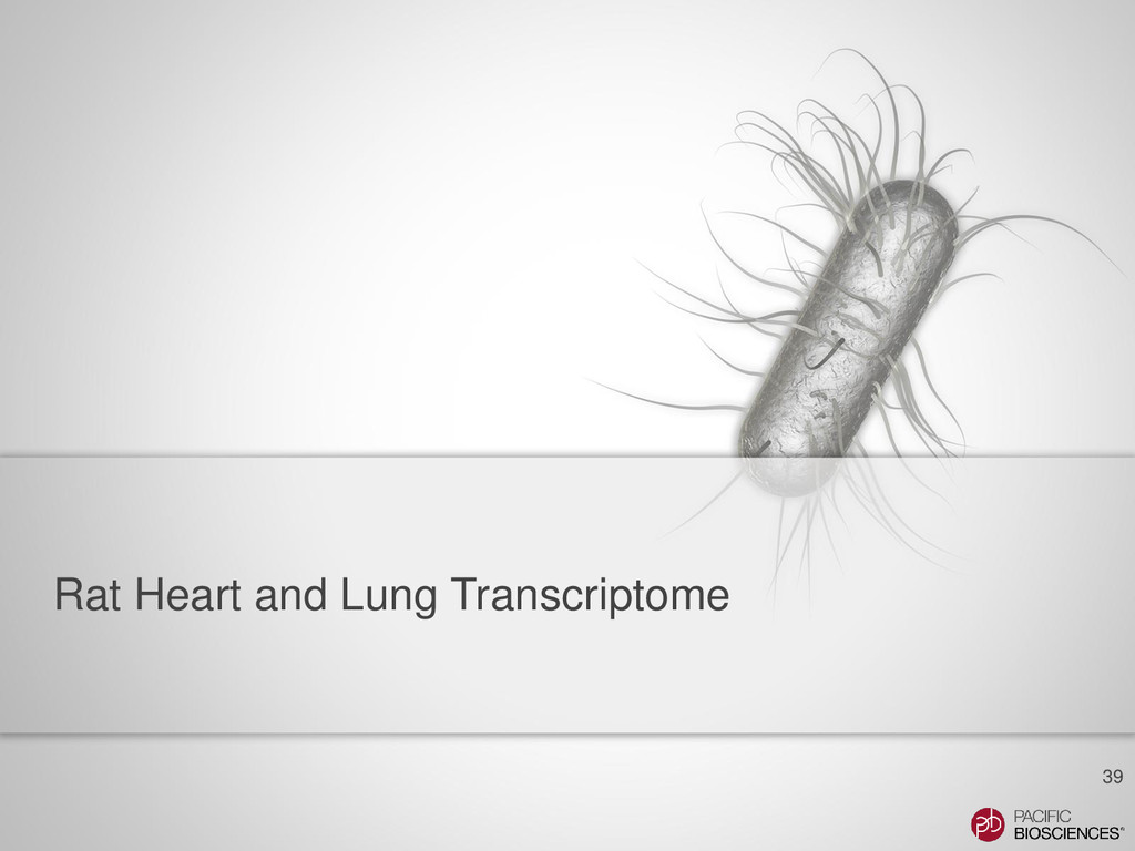 Rat Heart and Lung Transcriptome 39