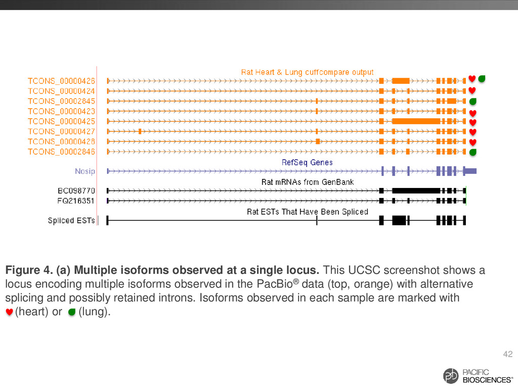 42 Figure 4. (a) Multiple isoforms observed at ...
