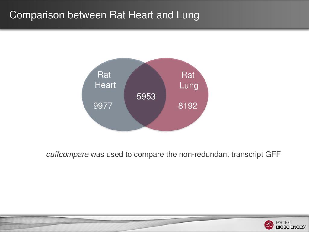 5953 8192 9977 Rat Heart Rat Lung Comparison be...