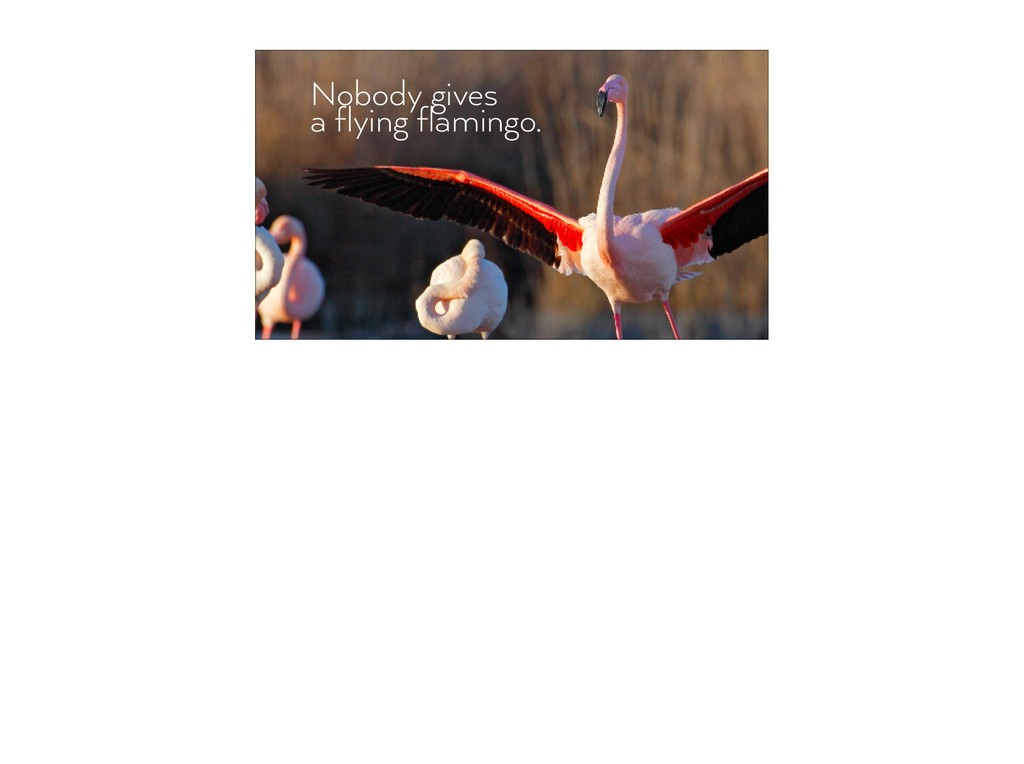 Nobody gives  a flying flamingo.