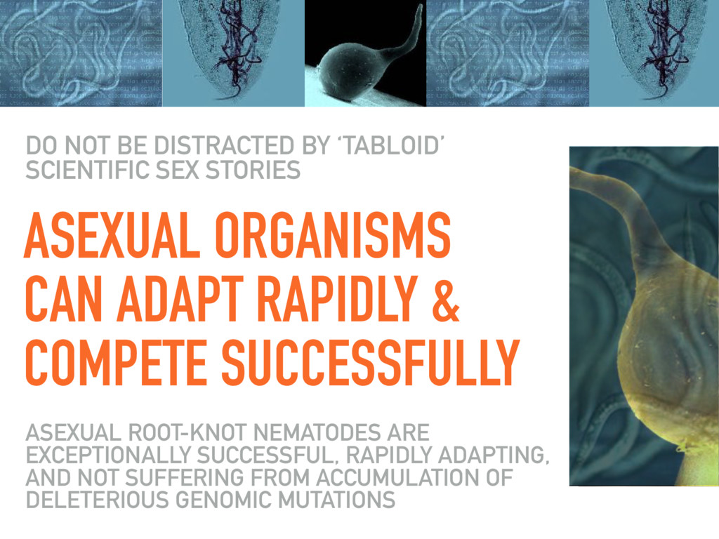 ASEXUAL ORGANISMS CAN ADAPT RAPIDLY & COMPETE S...