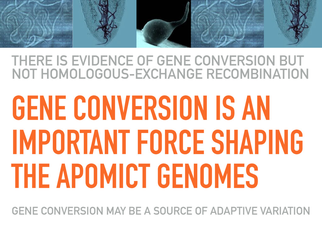 GENE CONVERSION IS AN IMPORTANT FORCE SHAPING T...