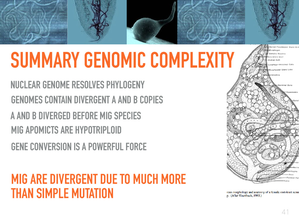 SUMMARY GENOMIC COMPLEXITY 41 GENOMES CONTAIN D...