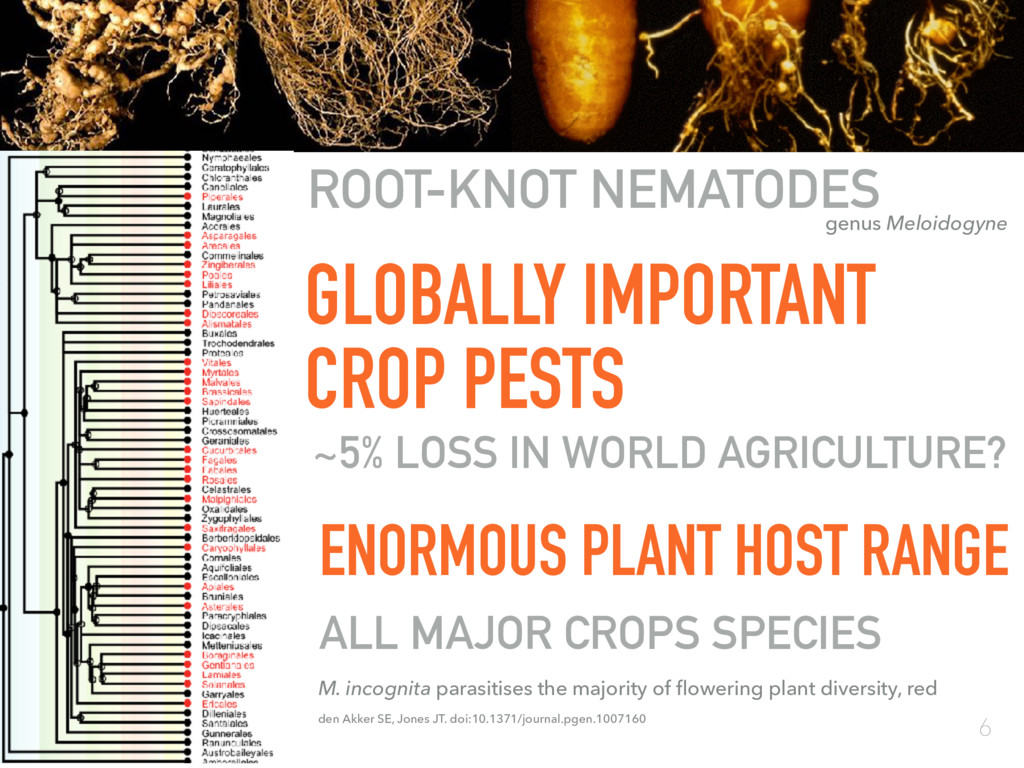 GLOBALLY IMPORTANT CROP PESTS ROOT-KNOT NEMATOD...