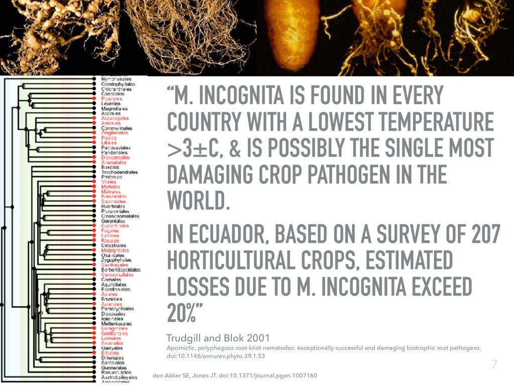 """""""M. INCOGNITA IS FOUND IN EVERY COUNTRY WITH A ..."""