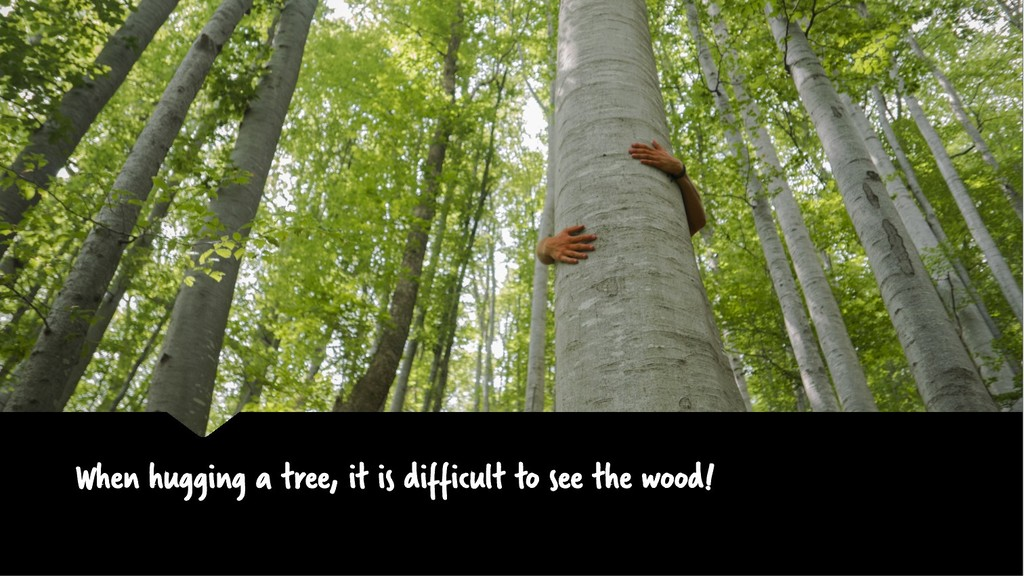 When hugging a tree, it is difficult to see the...