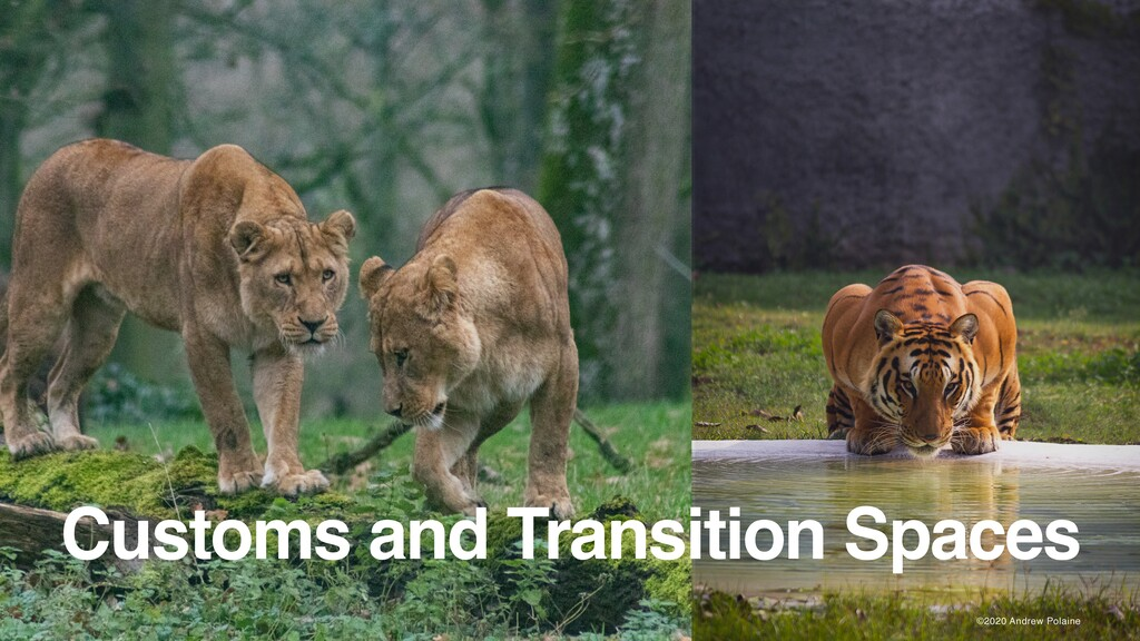 ©2020 Andrew Polaine Customs and Transition Spa...
