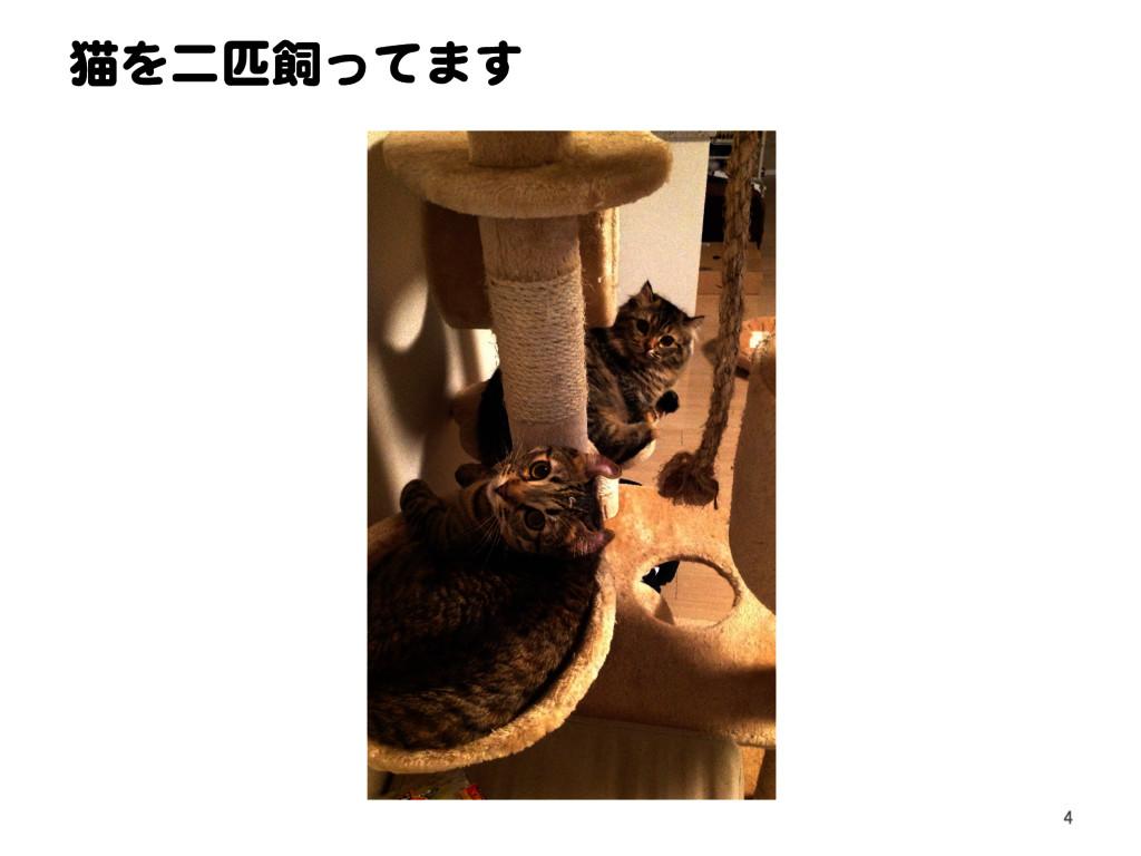 猫を二匹飼ってます 4
