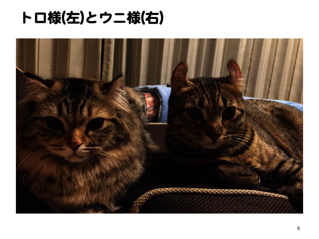 トロ様(左)とウニ様(右) 6