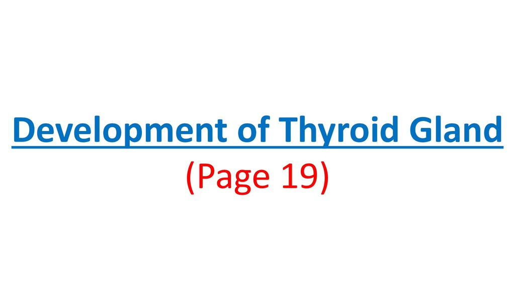 Development of Thyroid Gland (Page 19)