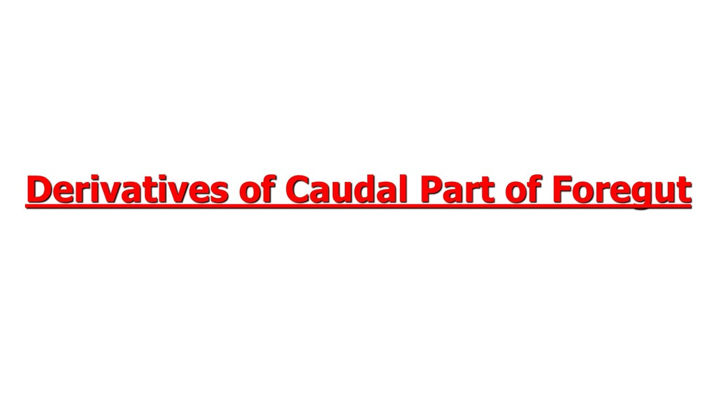 Derivatives of Caudal Part of Foregut