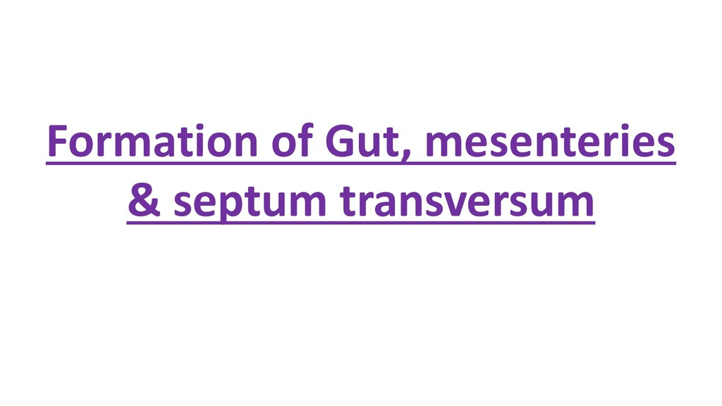 Formation of Gut, mesenteries & septum transver...
