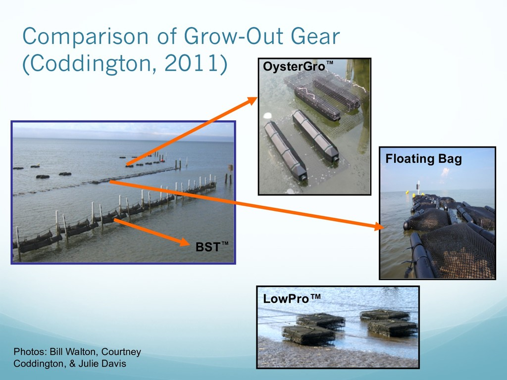 OysterGro™ Floating Bag LowPro™ BST™ Photos: Bi...