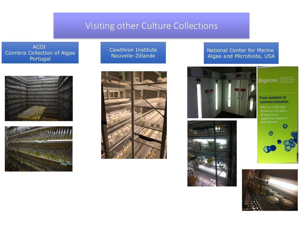 ACOI Coimbra Collection of Algae Portugal Visit...