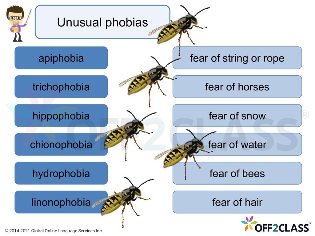 Unusual phobias apiphobia trichophobia hippopho...