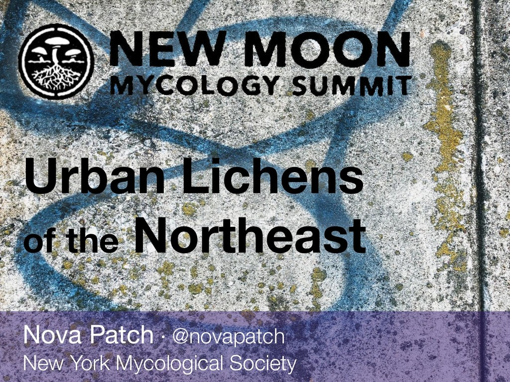 Urban Lichens of the Northeast Nova Patch · @no...