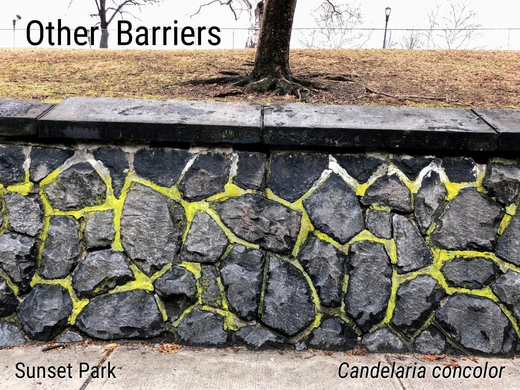 Other Barriers Sunset Park Candelaria concolor