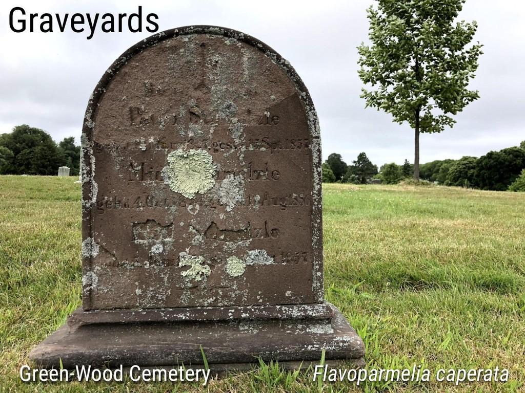 Graveyards Green-Wood Cemetery Flavoparmelia ca...